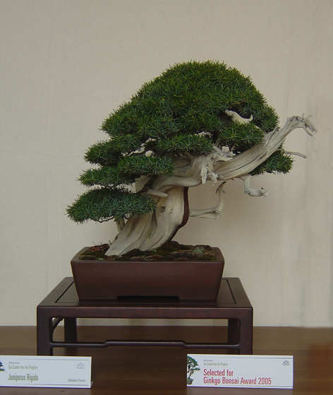 GINGO BONSAI AWARDS 2005