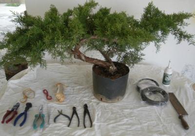 Προ-bonsai