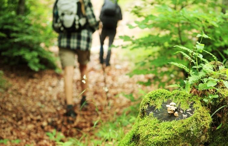 Λουτρό δάσους, Shinrin-yoku