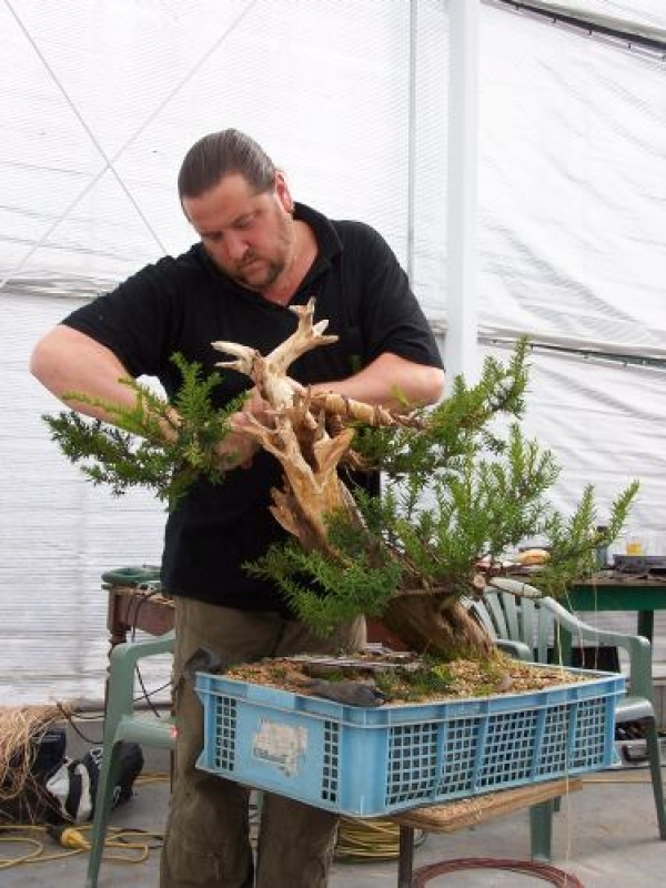 Hans van Meer bonsai stories part 2