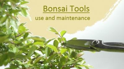 Εργαλεία για μπονσάι