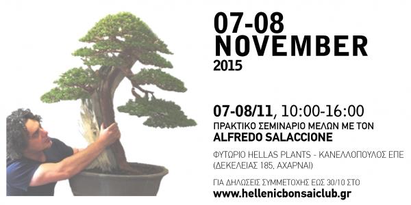 Hellenic Bonsai 2015 - Mediterraneo