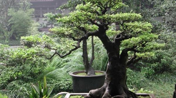 Από δέντρο φυτωρίου... σε potensai!