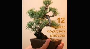 Δώδεκα βασικές αρχές των μπονσάι